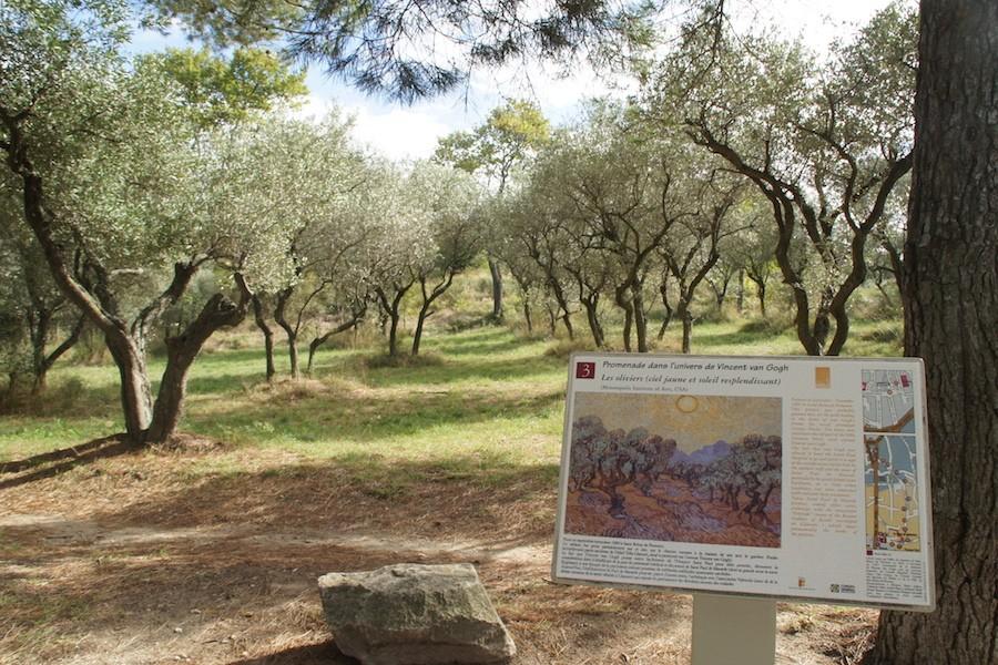 Van Gogh Tour Guides