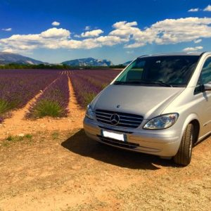 lavender tour in provence