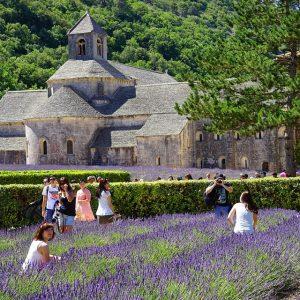 Lavender Tour, luberon tour