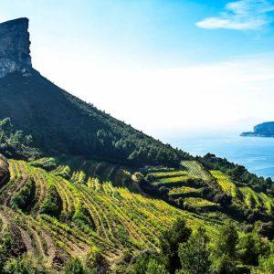Cassis Wine tour, bandol wine tour, provence wine tour