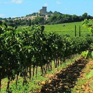 Châteauneuf du Pape Wine Tour,