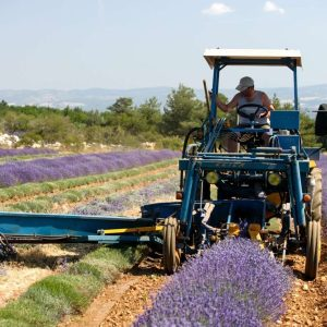 Lavender Tours, Lavender Shore Excursions, Lavender Private Tours, Lavender Private Guides, Lavender Tour Guides, Lavender Guide-Lecturers, Lavender Professional Guides, Best Lavender Tours, Best Lavender Guides, Best Lavender Shore Excursions, Cheap Lavender Tours, Cheap Lavender Shore Excursions, Lavender Private Shore Excursions, Lavender Cruise Services, Lavender Cruise Tours, Lavender Shore Trips, Lavender Day Trips