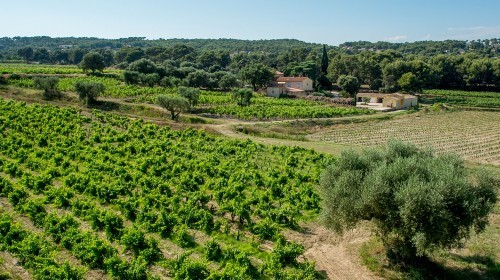 Bandol Wine Tasing La Garenne