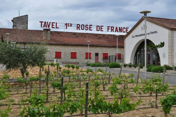 Tavel Wine Tour, Tavel Wine Tasting