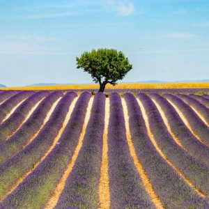 Tours in provence, Lavender Tour