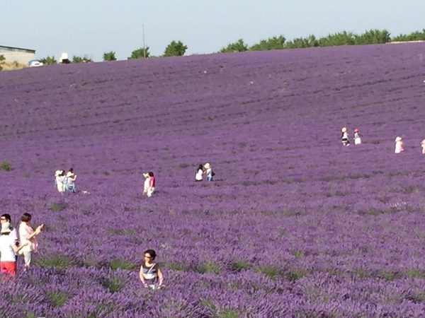 Valensole Bus Tours