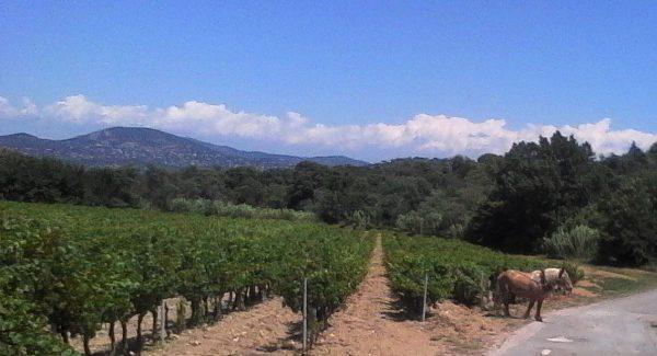 Saint Tropez Wine Tasting